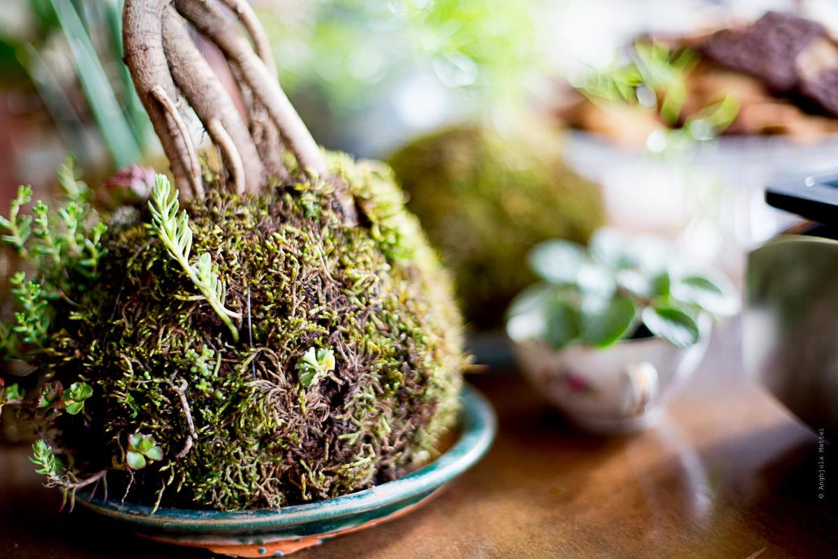 Vous avez un projet végétal ?